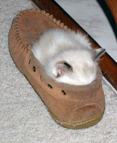 Кошки не смешно анекдоты приколы