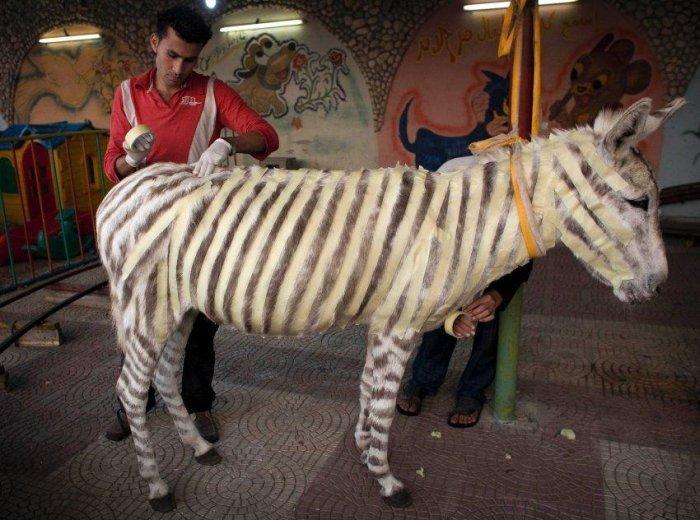 Сделаем из ослика зебру ;)