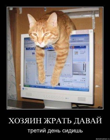 Прикол кот на компьютер