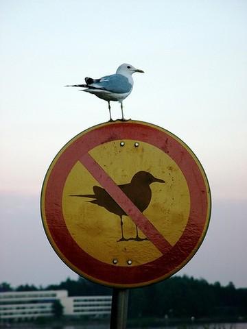 Чайка на запрещающем знаке