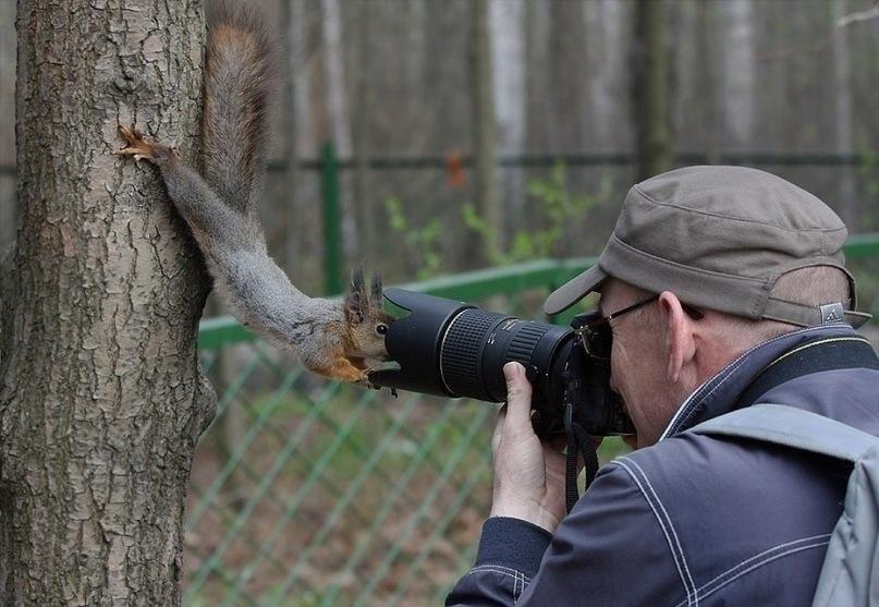 фотограф и белка крупным планом