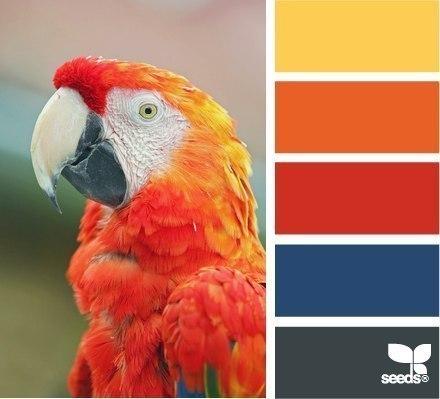 Примеры сочетания цветов