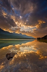 Красота живой природы