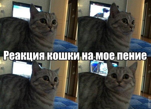 Реакция кошки на мое пение