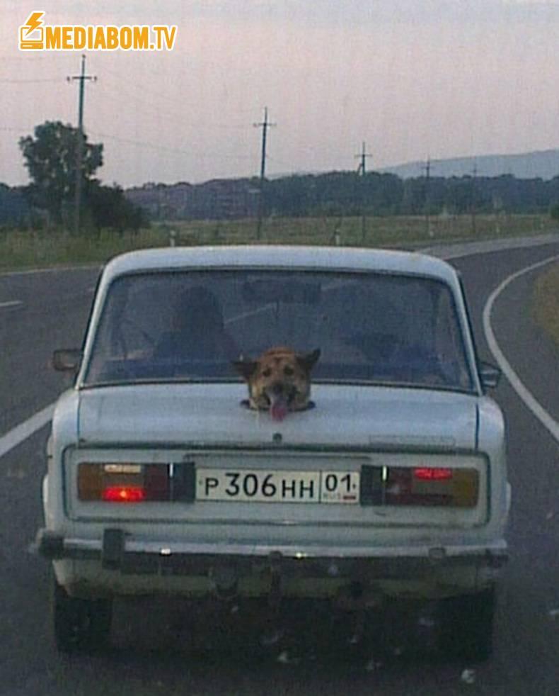 Вентиляционное отверстие в багажнике машины для головы собаки