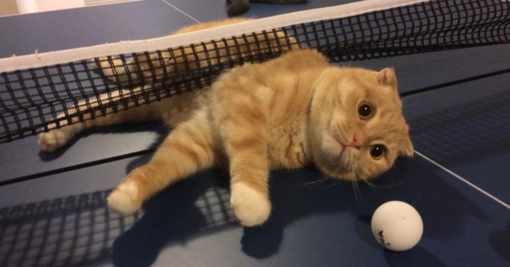 Кот пытался поиграть в настольный теннис, но запутался