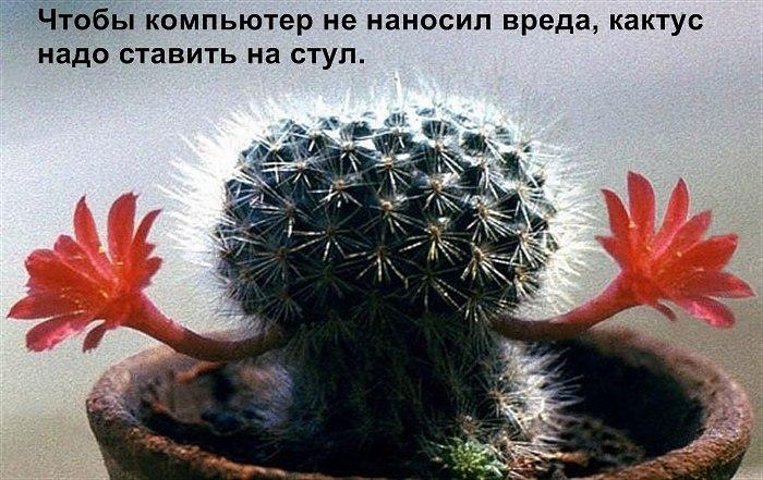 Полезный кактус