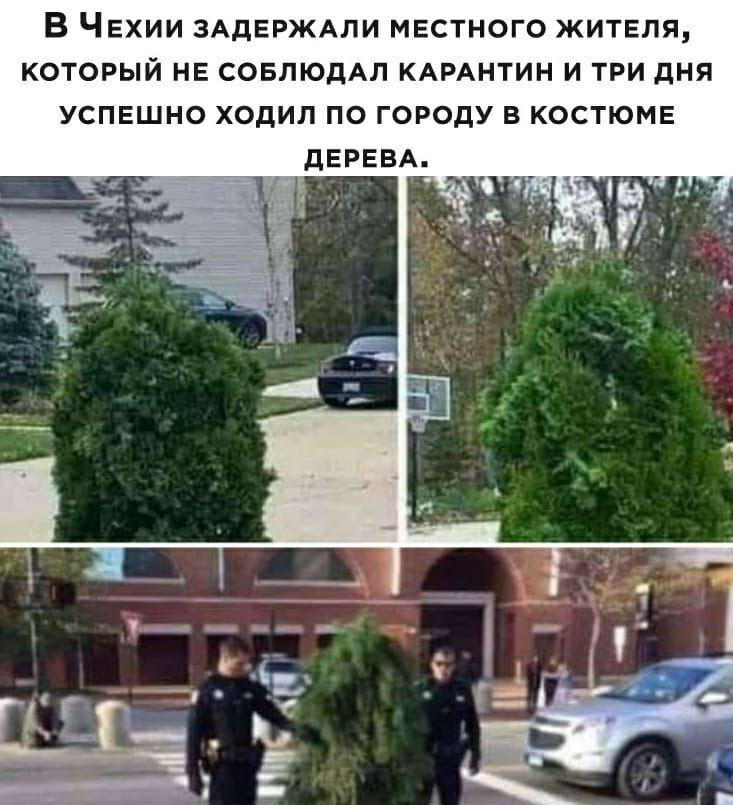 оделся как дерево, чтобы передвигаться по городу во время карантина